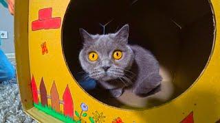 КАК СДЕЛАТЬ КРАСИВЫМ Домик для кошки?