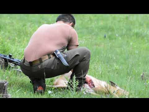 Roe Buck Hunting 2020: Mission Rhodope