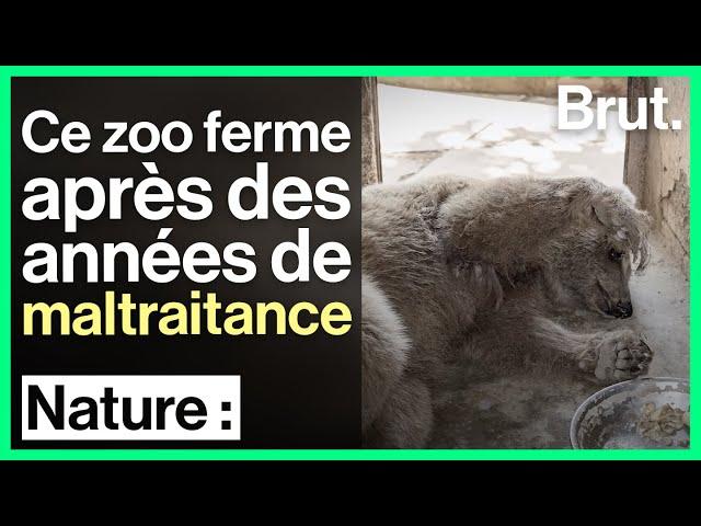 Maltraitance animale : le zoo de Marghazar ferme ses portes