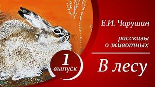 Е. И. Чарушин - В лесу  |  Аудиорассказы для детей