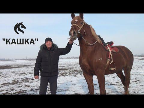 """АТТЫН АТЫ ЭКЕН ЖАНЫБАР """"КАШКА"""" / Тулпар KG"""