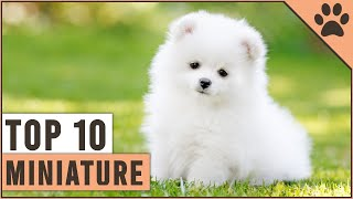 Top 10 Miniature Dog Breeds That Are Just Too Cute
