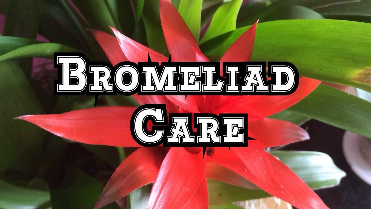 Bromeliad Care Instructions Indoors Garden Design Ideas