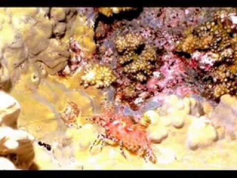 FeBrina- PNG  June 2013 TJC HIGH M-A-T version(05 07 13)