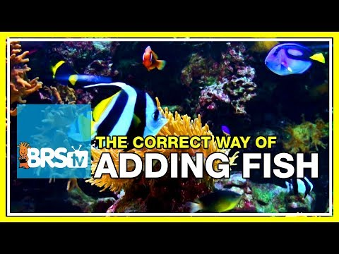 Week 15: Adding Saltwater Fish Intelligently And Safely | 52 Weeks Of Reefing