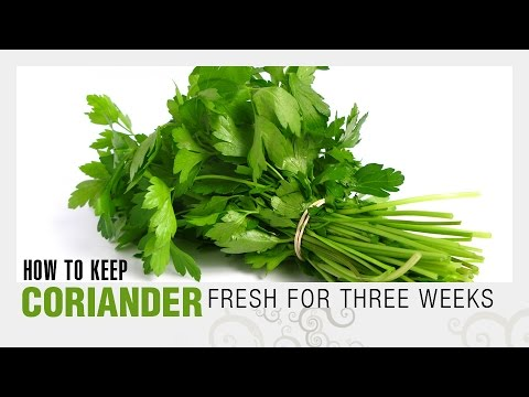 how to keep coriander leaves fresh for longer how to store cilantro - How To Preserve Celery