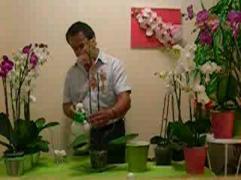 Cuidado de las orquideas orquideas el experto youtube - Cuidados paliativos en casa ...