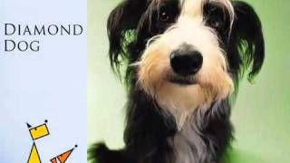 Diamond Dog Behaviour Consultancy