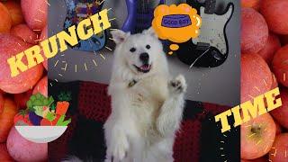 Dog Rates Crunchy Food / Krunch Time Atlas Edition