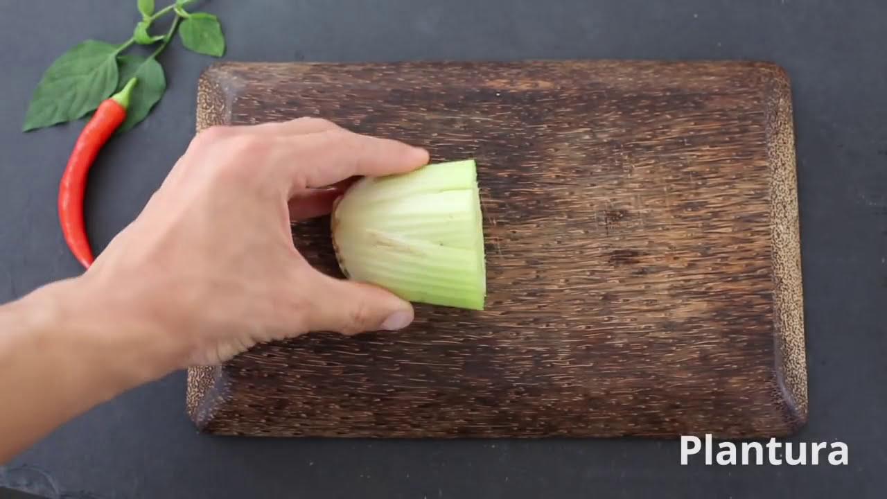 Gemüsereste Einpflanzen Zwiebel, Sellerie & Co. Nachwachsen ...