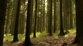 Storm of Shadows Trailer