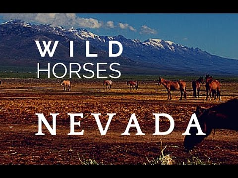 Visiting Wild Horses in Nevada: Mustang Monument