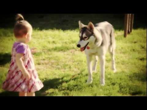 Baby Girl VS Husky Puppy