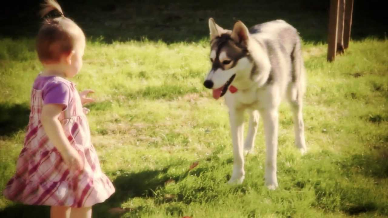 Baby Girl VS Husky Puppy YouTube