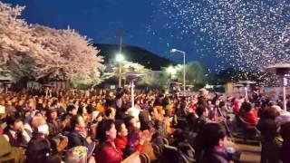 청풍 벚꽃축제 개막선언 2016 04 08