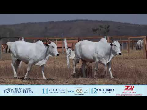 LOTE 196