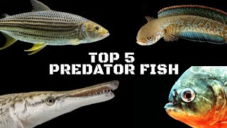 These Fishes are the Real Predators for an Aquarium...