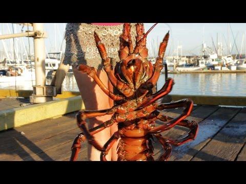 Biggest Crustacean Caught