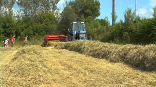 Hay Making At Chuckling Goat