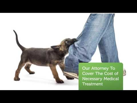 Dog Bite Lawyer Illinois