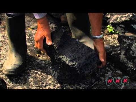 Landscape of the Pico Island Vineyard Culture (UNESCO/NHK)