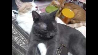じいちゃん猫に乗っかる孫猫。飼い主の使うバッグ大好きみたいです。