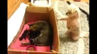 Puppies And Kittens Playing Together : Funny Videos, Kittens Playing