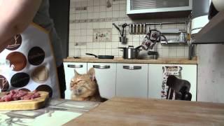 Попрошайка (кормление кота)