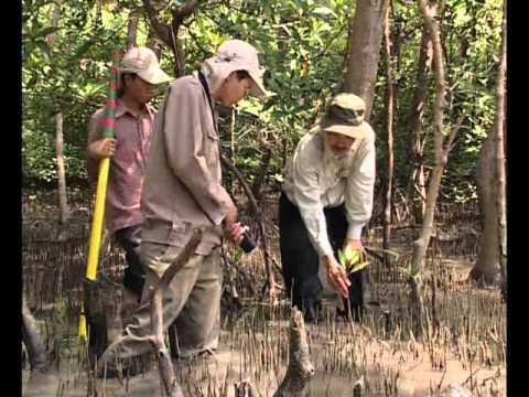 Hệ sinh thái rừng ngập mặn Cần Giờ [Part 3/3]