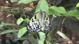 Butterfly Arc - Casa Delle Farfalle
