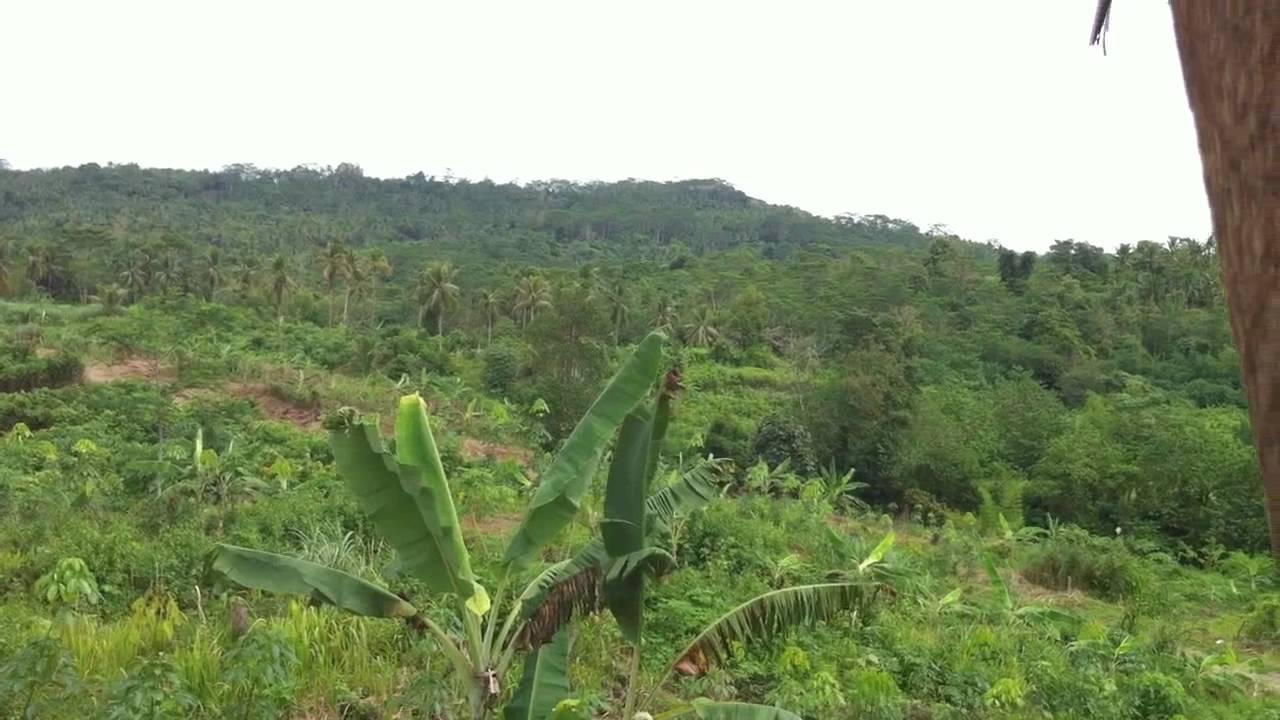 Rubber Plantation In Mindanao Philippines Youtube
