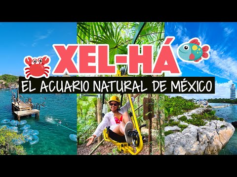 Xel-Há: lo que NO debes hacer en el parque acuático de Xcaret