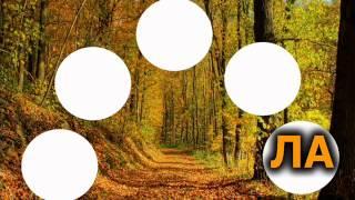 Šuma blista - pjesmica