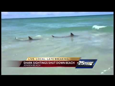 Sharks spotted at Jensen Beach
