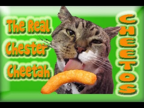 Cat Eating Cheetos