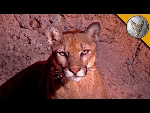 Thumbnail: A Day at the Arizona Sonora Desert Museum!