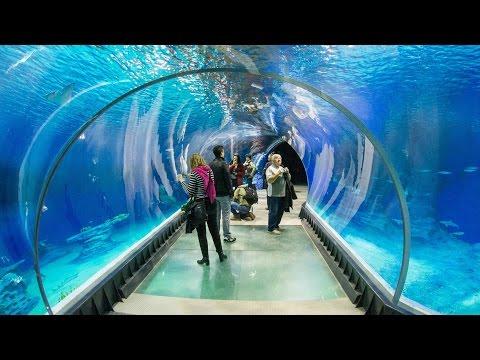 Największe oceanarium w Europie 🐬🐙🐡🦀 Lizbona #3