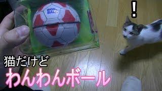 犬のおもちゃに猫は食いつくのか?