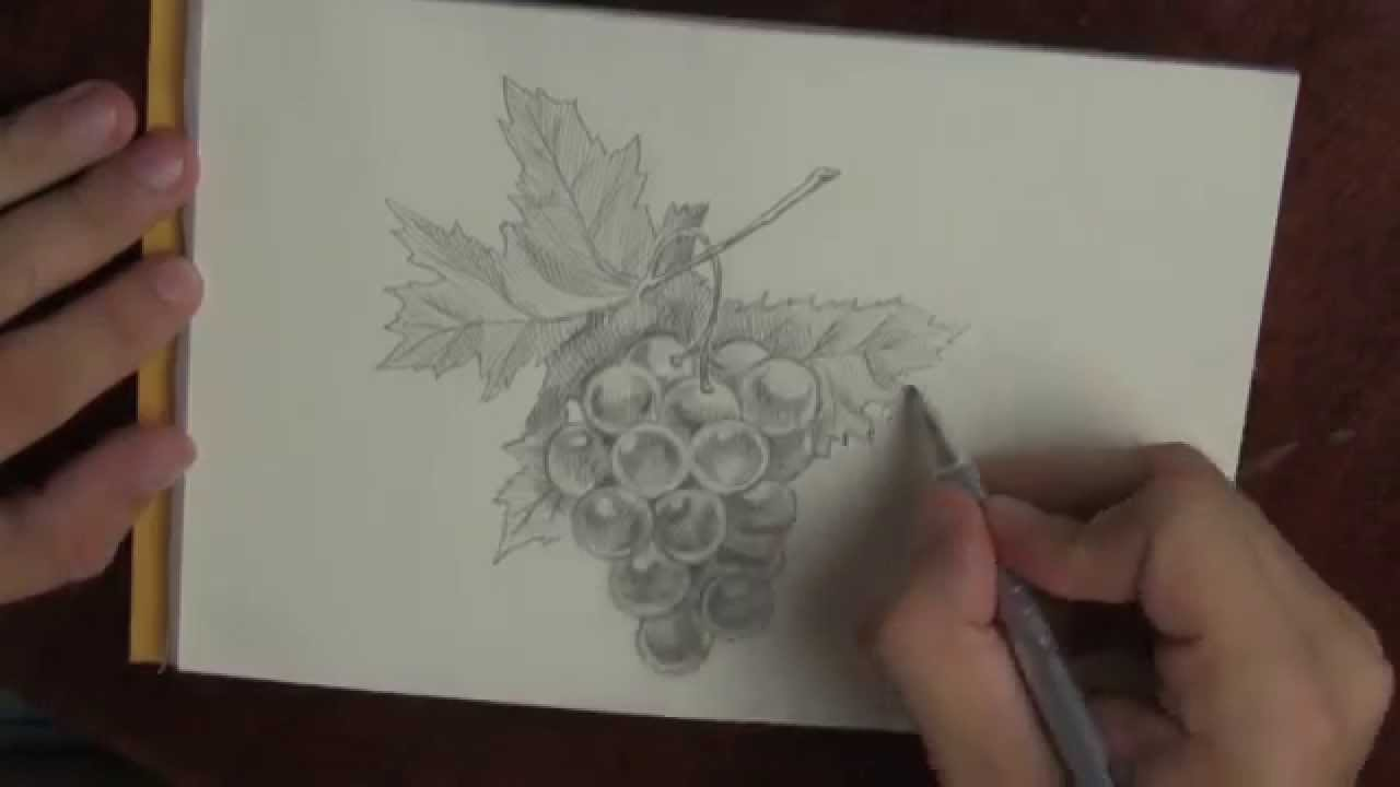 Fast Pencil Drawing Bunch Of Grapes
