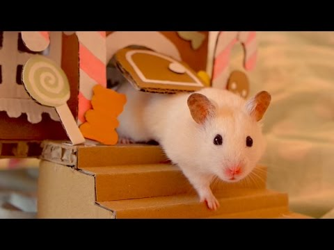 🍬 Vanilla explores the gingerbread house 🍭