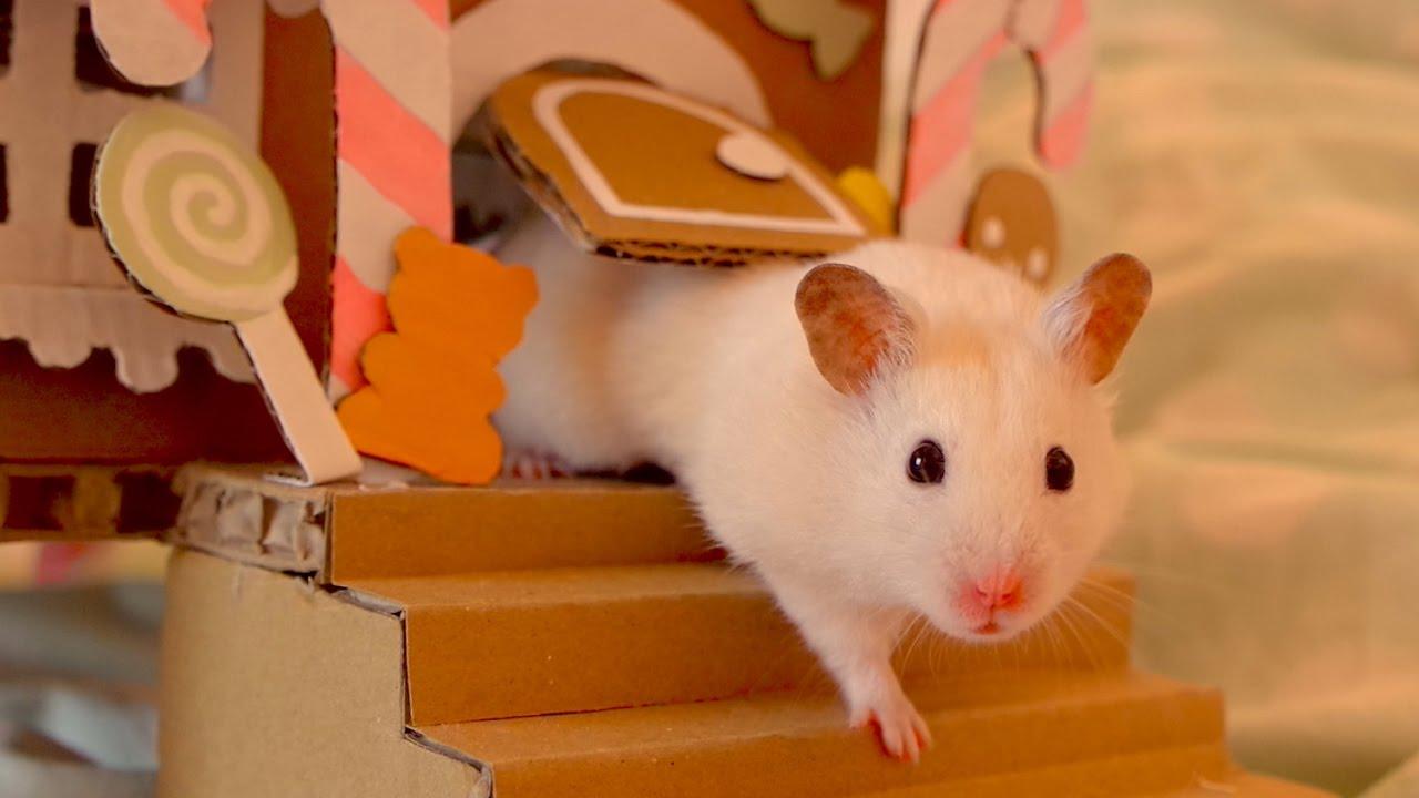 De Hamster.Com