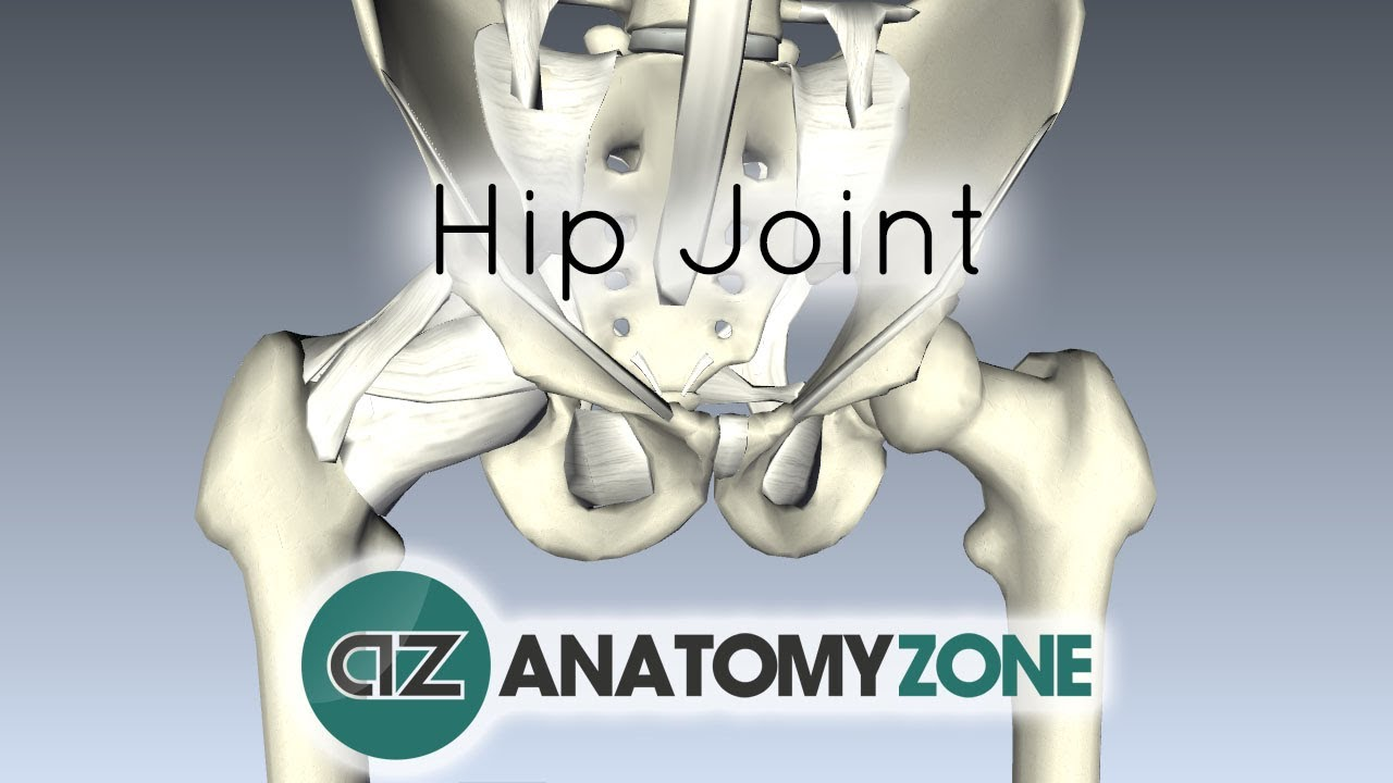 Hip Joint 3d Anatomy Tutorial Youtube