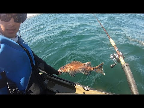 CRITICALLY ENDANGERED Species Caught And Released From A Kayak, A