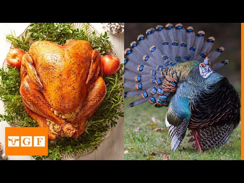 Top 10 Best Turkey Breeds