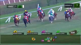 Vidéo de la course PMU PREMIO VISCONTI
