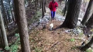 安曇野の「山登りねこ、ミュー」初冠雪の滝沢城址❸ thumbnail