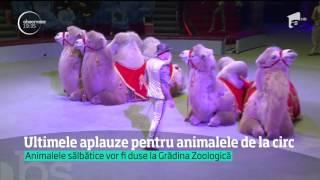 Animalele de la Circul Globus se pregătesc pentru ultimele spectacole
