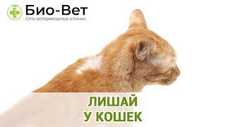 Лишайу кошек. Ветеринарная клиника Био-Вет.