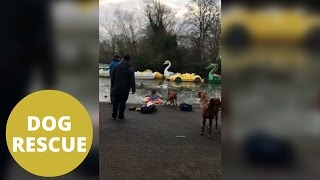 woman saves dog from freezing pond