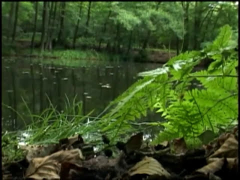 Search for WW2 German Pilot at Bottom of Pond in Germany